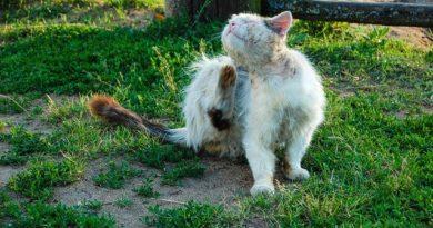 Flöhe bei Katzen – was hilft?