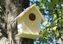 Der ideale Nistkasten für Vögel