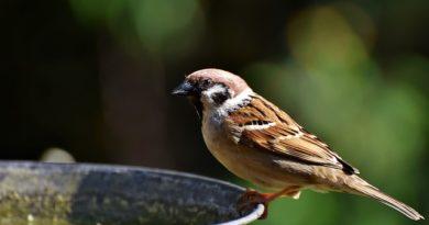 Wassertränke für Vögel