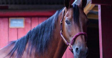 Die Wurmkur beim Pferd