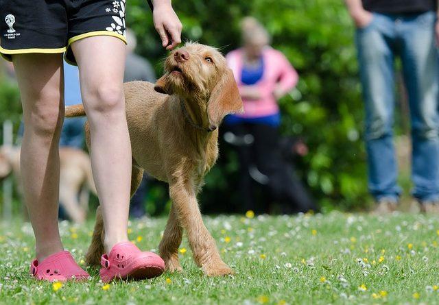 10 Regeln der Hundeerziehung