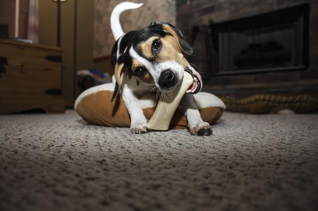 Kauknochen für Hunde