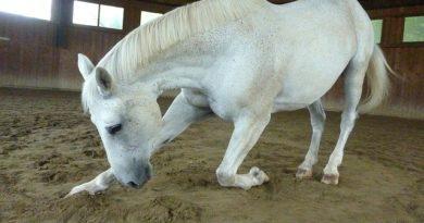 Kolik beim Pferd – Was musst Du tun?