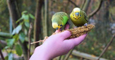 So hälst du einen Vogel richtig zu Hause