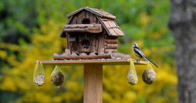 Vögel im Garten richtig füttern
