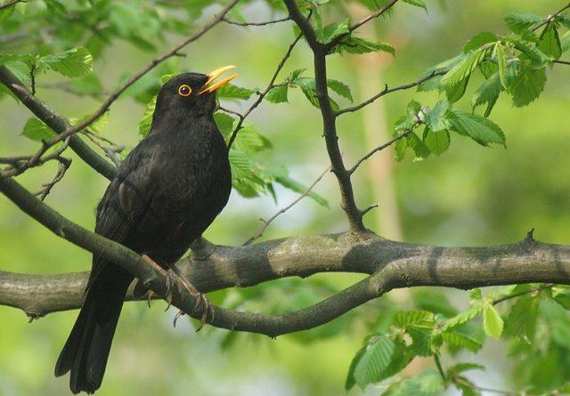 Die heimischen Vogelarten in Deutschland