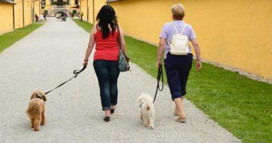 Bei Fuß gehen dem Hund beibringen
