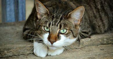 Die Katzensprache - Was du wissen solltest