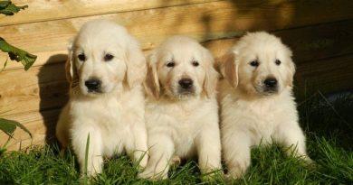 So bekommst du deinen Hunde stubenrein