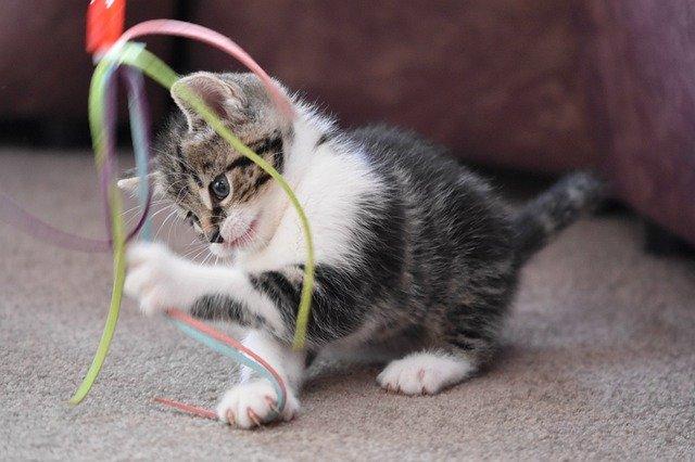 Katzen richtig beschäftigen