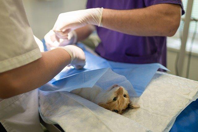 Was kostet ein Tierarztbesuch mit der Katze?