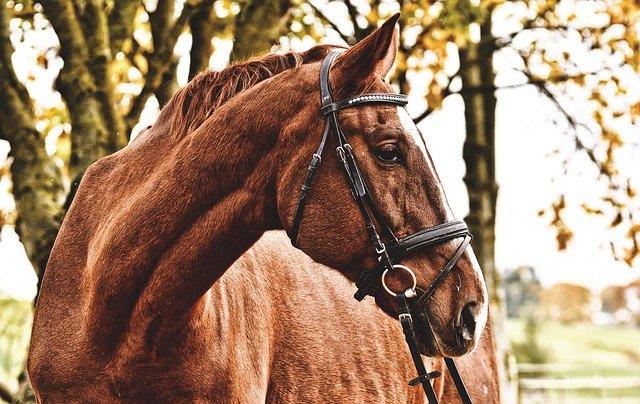 Was kostet ein Pferd pro Monat?
