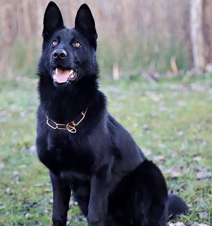 10 Kommandos, die jeder Hund kennen muss