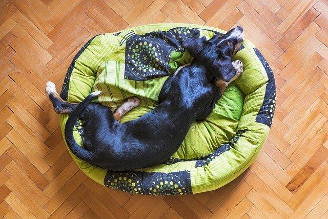 Das richtige Hundebett finden