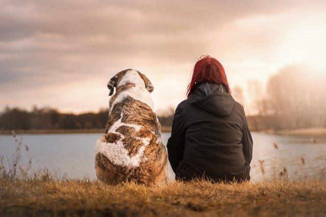 Die beliebtesten Hunderassen der Deutschen