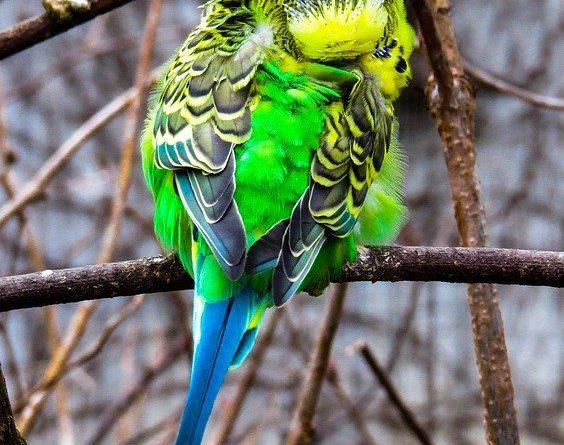 Ein vogelkundiger Tierarzt ist sehr wichtig!
