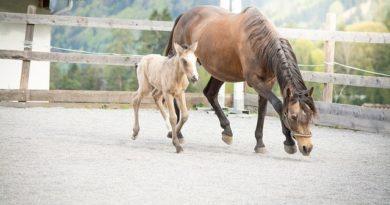 Guten und seriösen Pferdezüchter erkennen