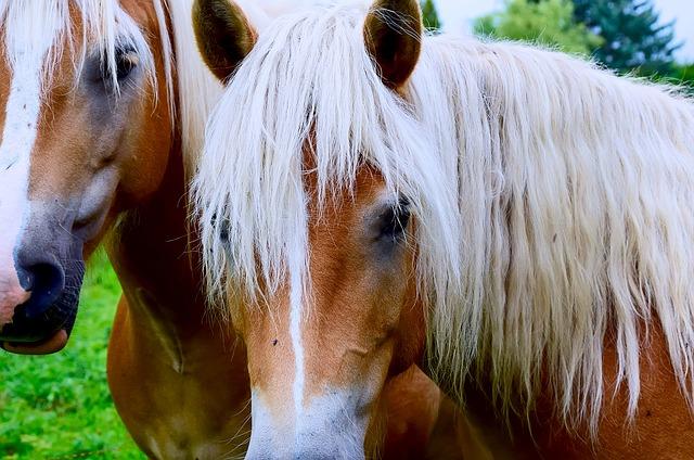 Tipps zum Pferdekauf