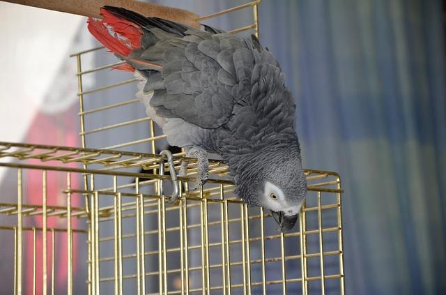 Erstausstattung Vogel