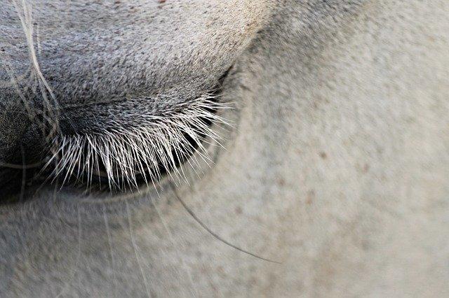 Corona bei Pferden