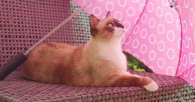 Sonnenschutz für Katzen
