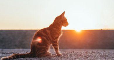Sonnencreme für Katzen